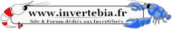 Invertebia