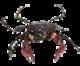 Image de la catégorie Crabes