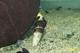 Image de Tylomelania sp yellow