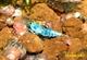 Image de Taiwan bee deep blue bolt