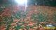 Image de Neocaridina davidi var red Sakura  S S